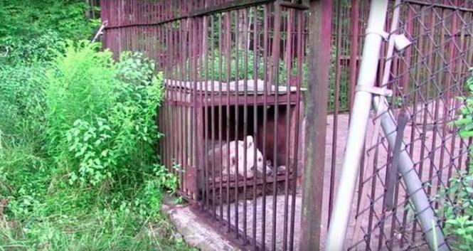 Η διάσωση και μεταμόρφωση μιας αρκούδας (5)