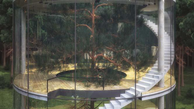 Εκπληκτικό γυάλινο σπίτι γύρω από ένα δέντρο (6)