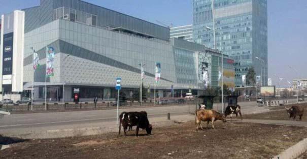 Εν τω μεταξύ, στο Καζακστάν... (4)