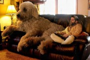 Ένας φωτογράφος και ο «γιγάντιος» σκύλος του διασκεδάζουν στο Instagram (22)