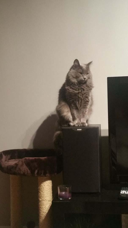 Γάτες που αντέδρασαν με ξεκαρδιστικό τρόπο στο δώρο που πήραν (2)