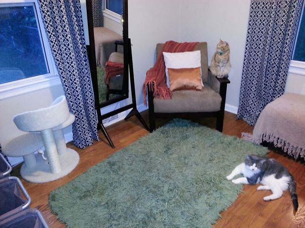 Γάτες που αντέδρασαν με ξεκαρδιστικό τρόπο στο δώρο που πήραν (3)