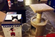 Γάτες που αντέδρασαν με ξεκαρδιστικό τρόπο στο δώρο που πήραν (5)