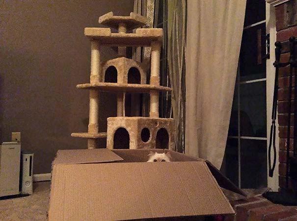 Γάτες που αντέδρασαν με ξεκαρδιστικό τρόπο στο δώρο που πήραν (7)