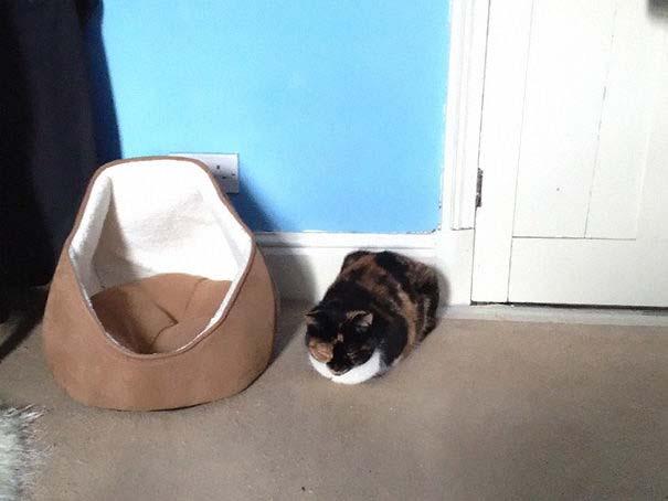Γάτες που αντέδρασαν με ξεκαρδιστικό τρόπο στο δώρο που πήραν (8)