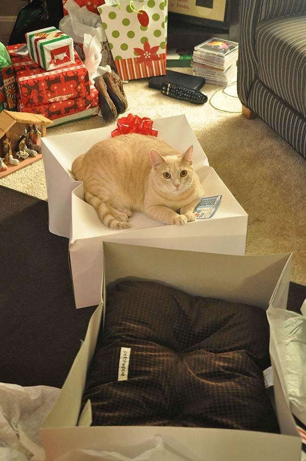 Γάτες που αντέδρασαν με ξεκαρδιστικό τρόπο στο δώρο που πήραν (9)