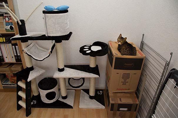 Γάτες που αντέδρασαν με ξεκαρδιστικό τρόπο στο δώρο που πήραν (10)