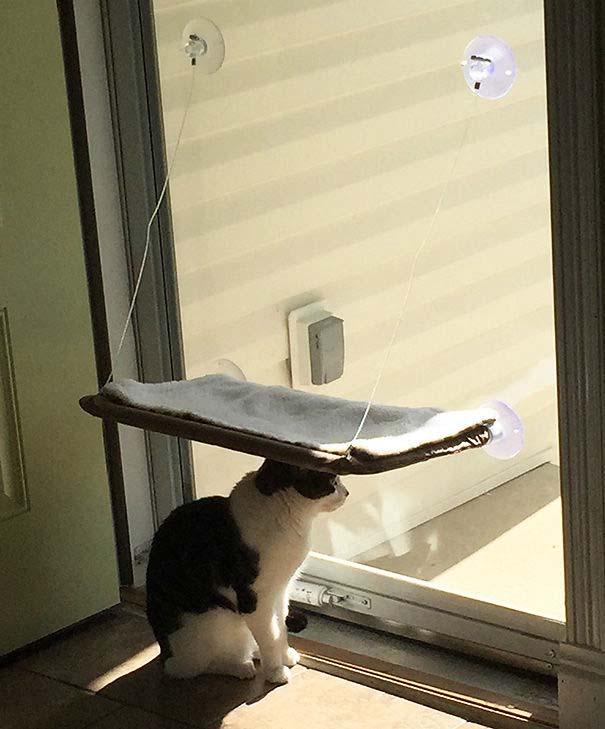 Γάτες που αντέδρασαν με ξεκαρδιστικό τρόπο στο δώρο που πήραν (11)