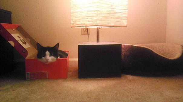 Γάτες που αντέδρασαν με ξεκαρδιστικό τρόπο στο δώρο που πήραν (12)