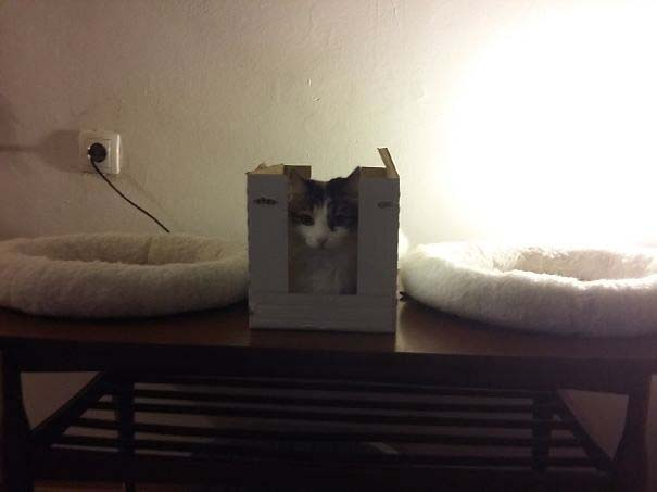 Γάτες που αντέδρασαν με ξεκαρδιστικό τρόπο στο δώρο που πήραν (13)