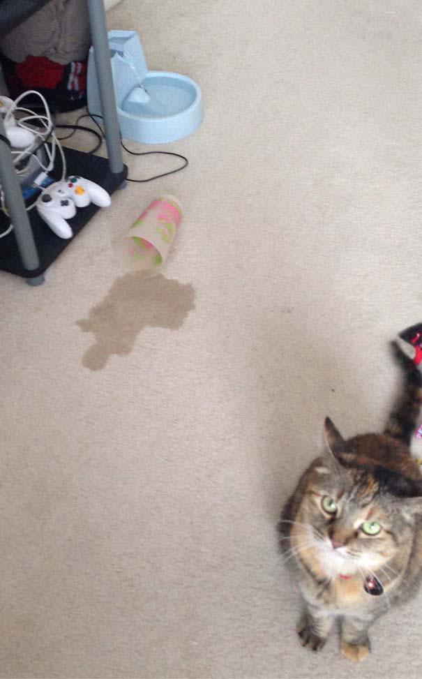 Γάτες που αντέδρασαν με ξεκαρδιστικό τρόπο στο δώρο που πήραν (14)