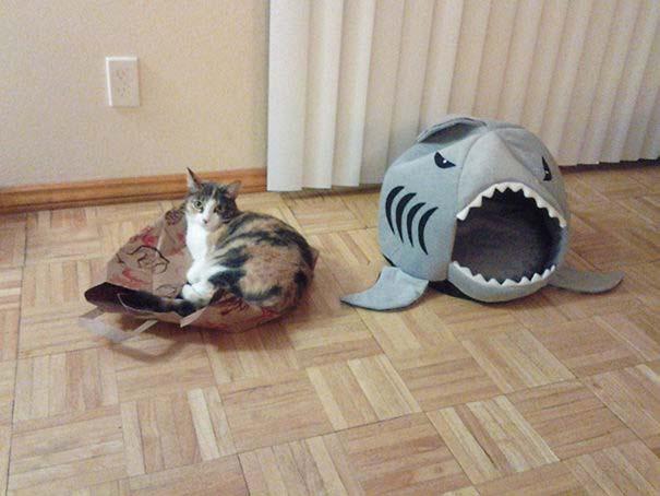 Γάτες που αντέδρασαν με ξεκαρδιστικό τρόπο στο δώρο που πήραν (16)