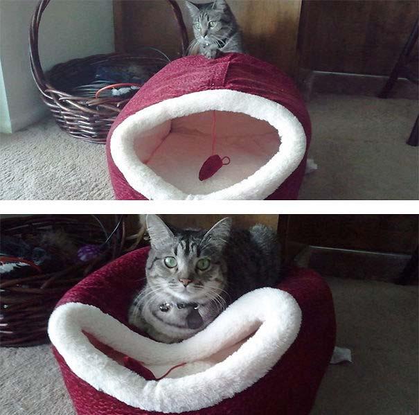 Γάτες που αντέδρασαν με ξεκαρδιστικό τρόπο στο δώρο που πήραν (17)