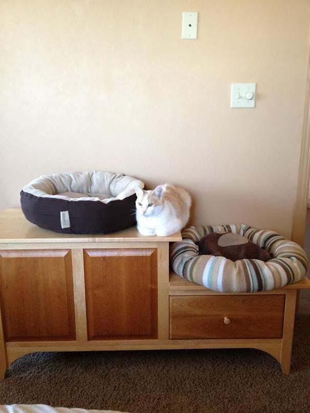 Γάτες που αντέδρασαν με ξεκαρδιστικό τρόπο στο δώρο που πήραν (18)