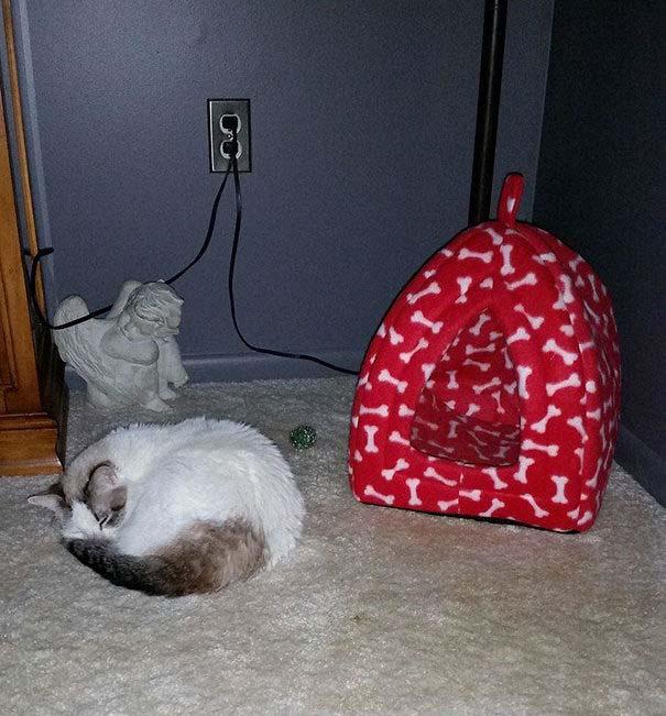 Γάτες που αντέδρασαν με ξεκαρδιστικό τρόπο στο δώρο που πήραν (19)