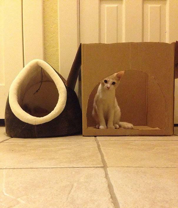Γάτες που αντέδρασαν με ξεκαρδιστικό τρόπο στο δώρο που πήραν (20)