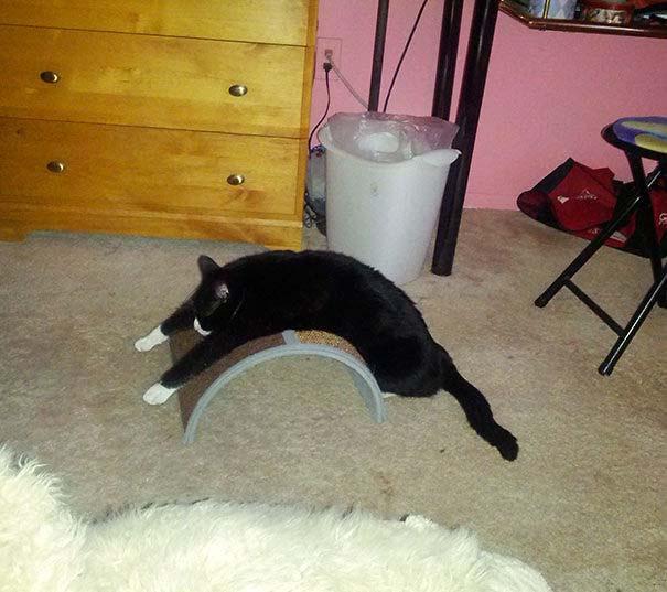 Γάτες που αντέδρασαν με ξεκαρδιστικό τρόπο στο δώρο που πήραν (21)