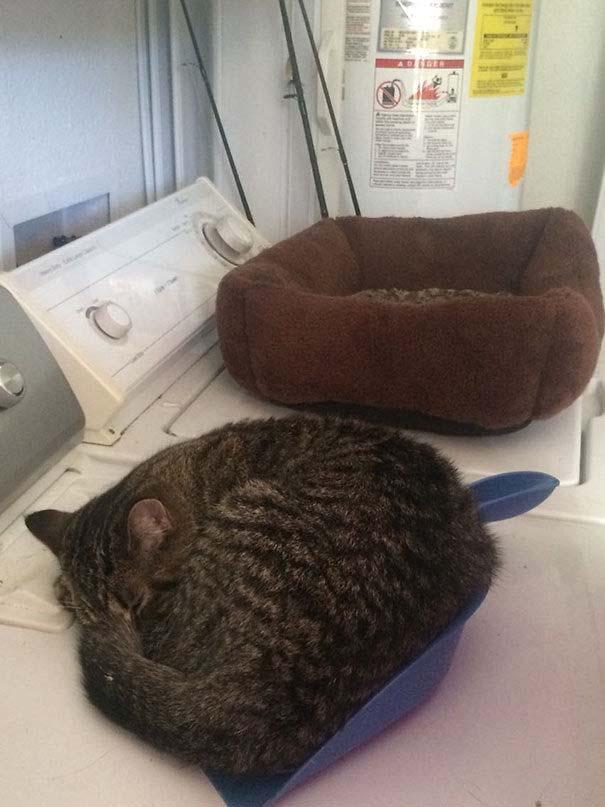 Γάτες που αντέδρασαν με ξεκαρδιστικό τρόπο στο δώρο που πήραν (22)