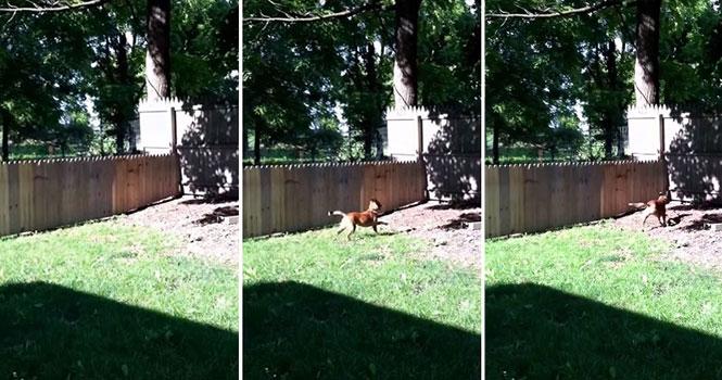 Ιδιοκτήτης θαυμάζει τον φράχτη που έφτιαξε για τον σκύλο του, όταν ξαφνικά...