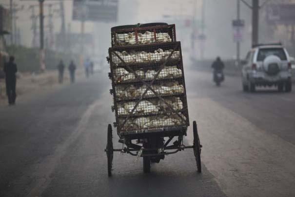 Καθημερινότητα στην Ινδία (29)