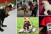 42 ξεκαρδιστικές αποκριάτικες μεταμφιέσεις ζώων