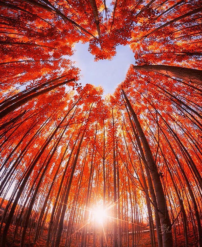 Η καρδιά του δάσους | Φωτογραφία της ημέρας
