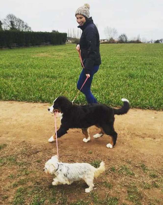 Σκύλοι που νομίζουν πως είναι άνθρωποι (3)