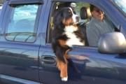 Σκύλοι που νομίζουν πως είναι άνθρωποι (9)
