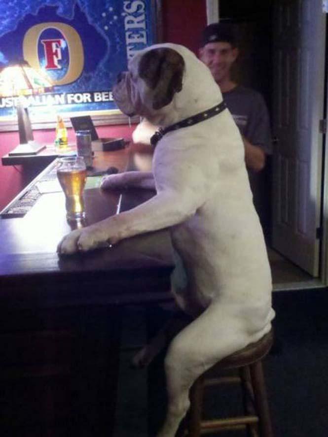 Σκύλοι που νομίζουν πως είναι άνθρωποι (13)