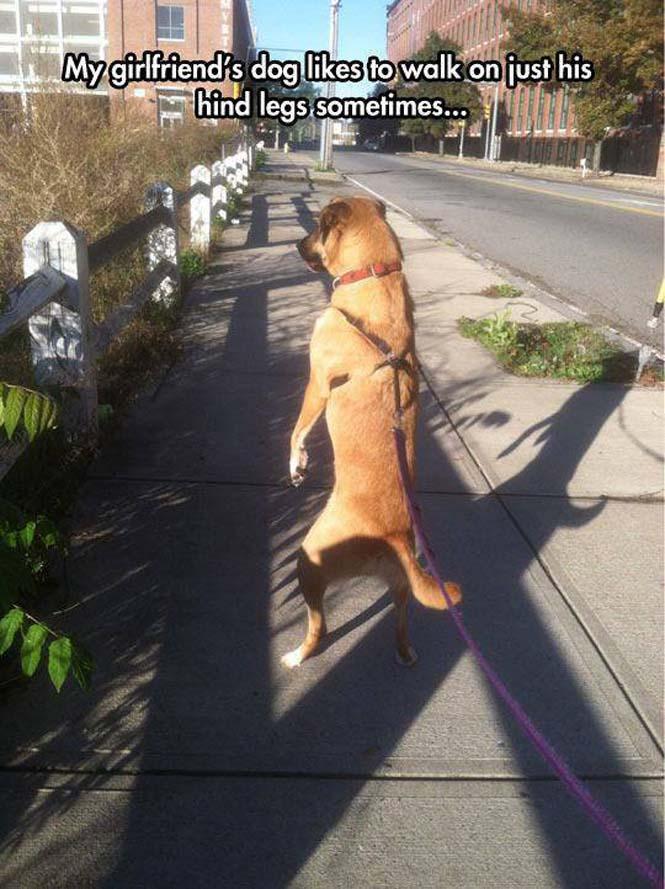 Σκύλοι που νομίζουν πως είναι άνθρωποι (20)