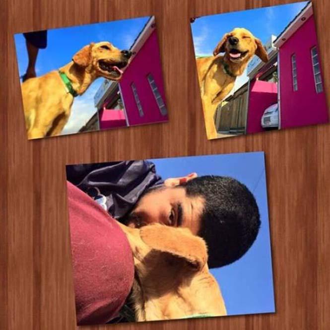 Σκύλος επέζησε αφού διασώθηκε από λάκκο με πίσσα (9)