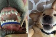 Σκύλος με σιδεράκια (1)