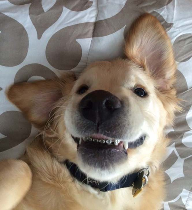 Σκύλος με σιδεράκια (6)