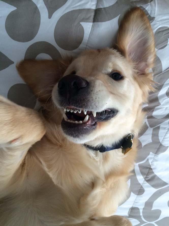 Σκύλος με σιδεράκια (8)