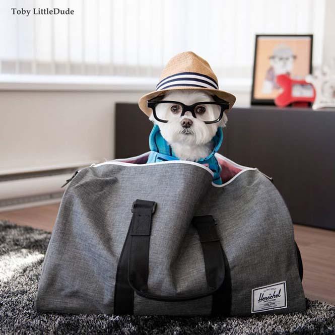 Toby: Ο μεγαλύτερος Hipster στο Instagram (3)