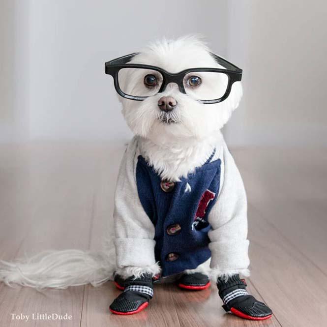 Toby: Ο μεγαλύτερος Hipster στο Instagram (7)