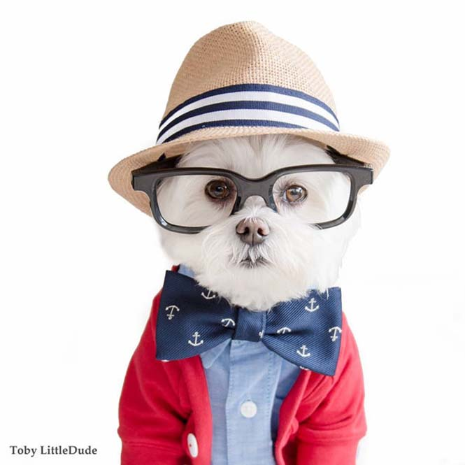 Toby: Ο μεγαλύτερος Hipster στο Instagram (8)