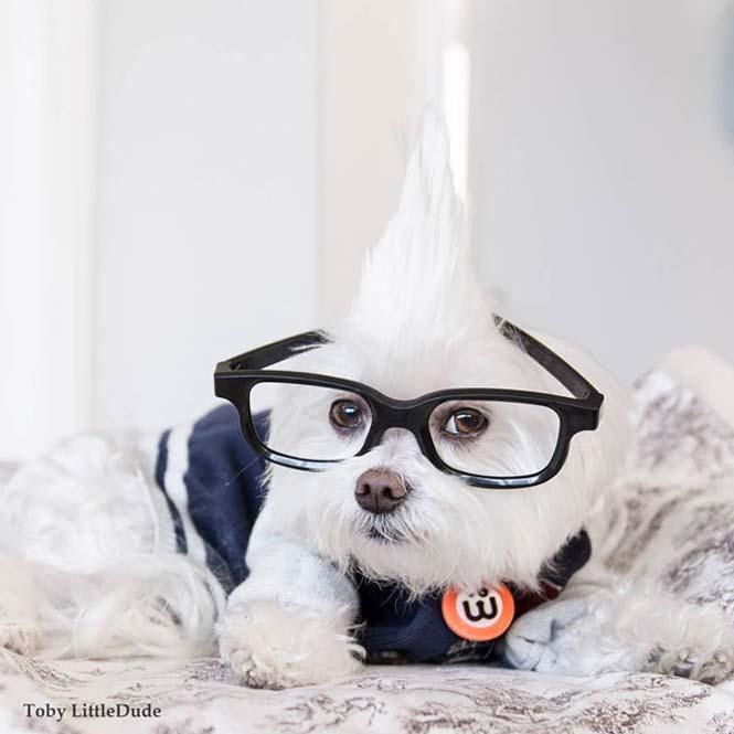 Toby: Ο μεγαλύτερος Hipster στο Instagram (12)