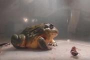 Βάτραχος που τρώει τα πάντα