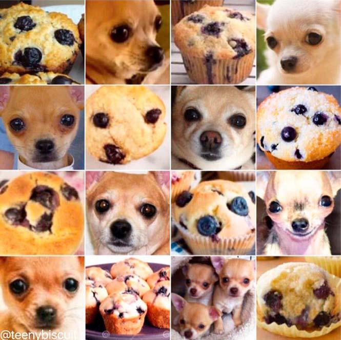 Ζώα ή τρόφιμα; (1)