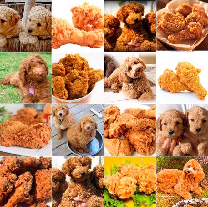 Ζώα ή τρόφιμα; (5)