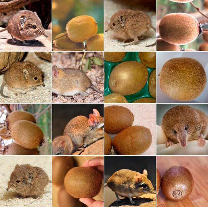Ζώα ή τρόφιμα; (9)