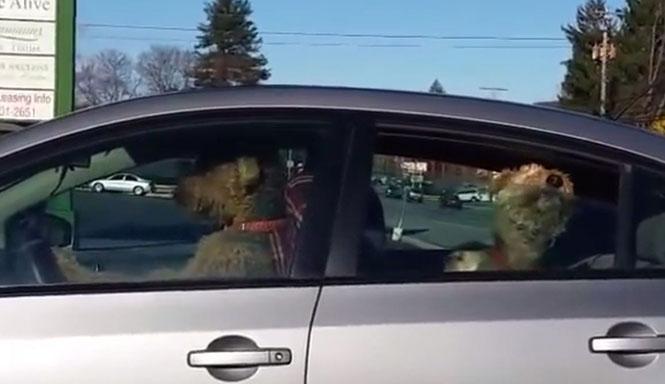 Ανυπόμονος σκύλος πήρε την κατάσταση πάνω του