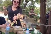 Απίστευτα περιστατικά με μαϊμούδες