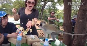 Απίστευτα περιστατικά με μαϊμούδες (Video)