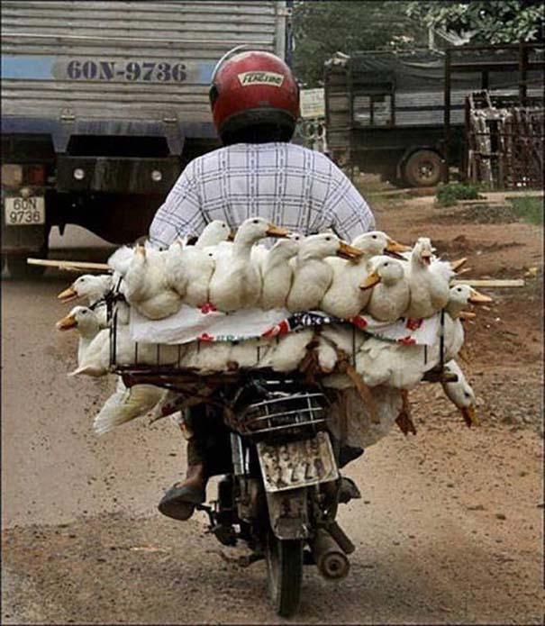 Ασυνήθιστες και εξωφρενικές μεταφορές (10)
