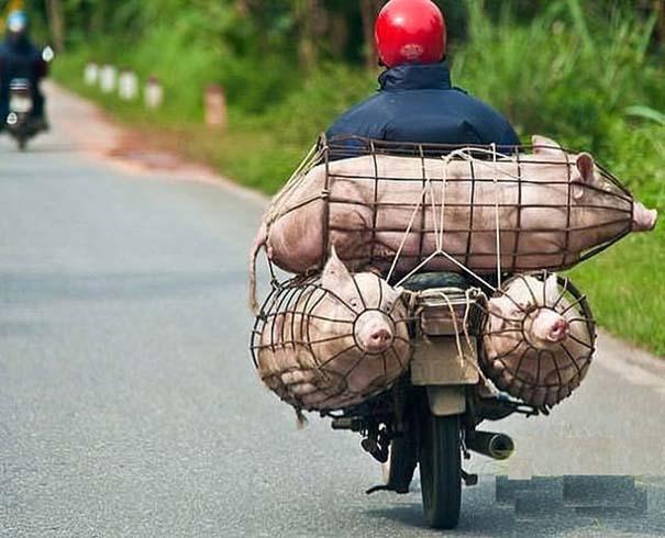 Ασυνήθιστες και εξωφρενικές μεταφορές (12)