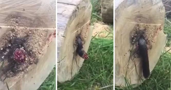 Έκοψε δένδρο και βρήκε μέσα του έναν ζωντανό εφιάλτη