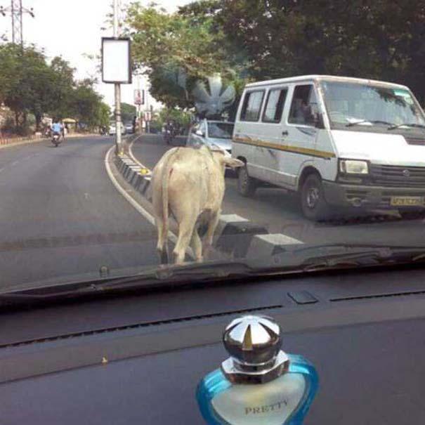 Εν τω μεταξύ, στην Ινδία... #16 (5)