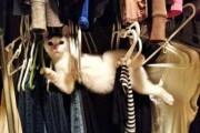 Γάτες που... κάνουν τα δικά τους! #27 (1)